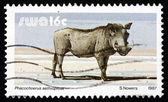 Postage stamp South West Africa 1987 Warthog, Wild Pig — Stock Photo