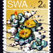 Stock Photo: Postage stamp South West Afric1973 Karoo Rose, Succulent Plant