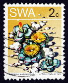 Postage stamp South West Africa 1973 Karoo Rose, Succulent Plant — Stock Photo