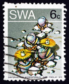 Postage stamp South West Africa 1973 Stone Plant, Succulent Plan — Stock Photo