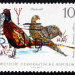 Stock Photo: Postage stamp GDR 1968 Ring-necked Pheasants, Game Bird
