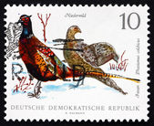Postage stamp GDR 1968 Ring-necked Pheasants, Game Bird — Stock Photo