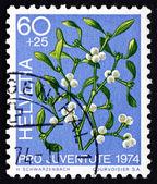 Postage stamp Switzerland 1974 Mistletoe, Viscum Album, Plant — Stock Photo