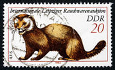 Postage stamp GDR 1982 European Polecat — Stock Photo