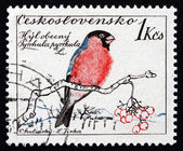 Postage stamp Czechoslovakia 1959 Common Bullfinch, Passerine Bi — Stock Photo