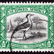 Stock Photo: Postage stamp South West Afric1931 Kori Bustard, Bird
