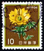 Postage stamp Japan 1980 Amur Adonis, Flower — Stock Photo