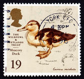 Postage stamp GB 1996 Muscovy Duck, Painting — Stock Photo