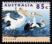 Postage stamp Australia 1994 Pelican, Water Bird — Stock Photo
