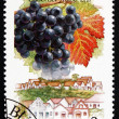 Stock Photo: Postage stamp Hungary 1990 Cabernet Franc, Hajos-Vaskut