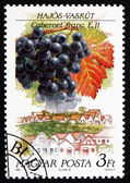 Postage stamp Hungary 1990 Cabernet Franc, Hajos-Vaskut — Stock Photo