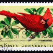 Postage stamp USA 1972 Cardinal, Passerine Bird — Stock Photo #38649355