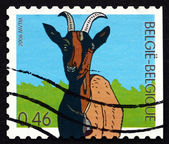 Postage stamp Belgium 2006 Goat, Farm Animal — Stock Photo