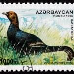 Postage stamp Azerbaijan 1995 Caucasian Grouse, Bird — Stock Photo