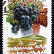 Stock Photo: Postage stamp Hungary 1990 Cabernet Sauvignon, Villany-Siklos