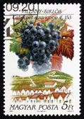 Postage stamp Hungary 1990 Cabernet Sauvignon, Villany-Siklos — Stock Photo