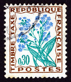 Postage stamp France 1964 Forget-me-not, Flower — Stock Photo