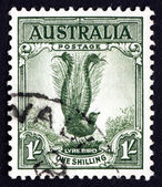 Postage stamp Australia 1941 Male Superb Lyrebird, Songbird — Stock Photo