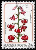 Postage stamp Hungary 1985 Martagon Lily, Plant — Stock Photo