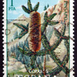 Postage stamp Spain 1972 Spanish Fir, Evergreen Tree — Stock Photo #40362977