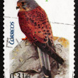 Postage stamp Spain 2008 Common Kestrel, Bird of Prey — Stock Photo #40543729