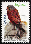 Postage stamp Spain 2008 Common Kestrel, Bird of Prey — Stock Photo