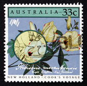 Postage stamp Australia 1986 Hibiscus Merankensis, Flower — Stock Photo