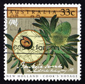 Postage stamp Australia 1986 Saw Banksia, Banksia Serrata — Stock Photo