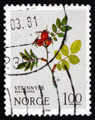 Postage stamp Norway 1980 Dog Rose, Deciduous Shrub — 图库照片