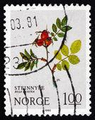 Postage stamp Norway 1980 Dog Rose, Deciduous Shrub — Stock Photo