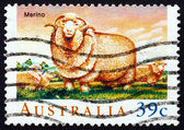 Postage stamp Australia 1989 Merino Sheep — Stock Photo