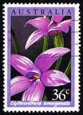 Postage stamp Australia 1986 The Notched Elythranthera, Orchid — Stock Photo