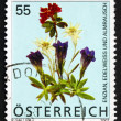 Postage stamp Austria 2007 Flowers — Stock Photo