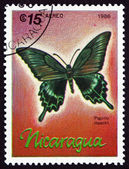 Postage stamp Nicaragua 1986 Alpine Black Swallowtail, Butterfly — Stock Photo