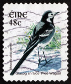 Postage stamp Ireland 1998 Pied Wagtail, Passerine Bird — Stock Photo