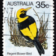 Postage stamp Australi1980 Regent Bower Bird, Bird — Stock Photo #41873855