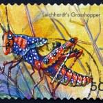 Postage stamp Australia 2003 Leichhardts Grasshopper, Insect — Stock Photo #42010633