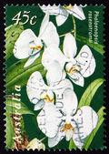 Postage stamp Australia 1998 Moon Orchid — Stock Photo