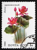 Postage stamp Russia 1984 Lotus, Aquatic Plant — Stock Photo