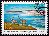 Postage stamp Russia 1989 Arctic Deer, Environmental Protection — Foto de Stock