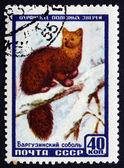 Postage stamp Russia 1957 Sable, Animal — Stock Photo