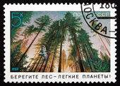 Postage stamp Russia 1989 Forest, Environmental Protection — Stock Photo