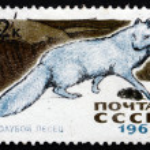 Postage stamp Russia 1967 Arctic Blue Fox — Stock Photo