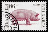 Postage stamp Bulgaria 1991 Sow, Farm Animal — Stock Photo