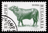 Postage stamp Bulgaria 1991 Bull, Farm Animal — Stock Photo