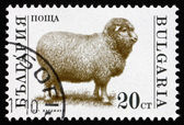 Postage stamp Bulgaria 1992 Sheep, Farm Animal — Stock Photo