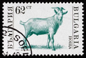 Postage stamp Bulgaria 1991 Goat, Farm Animal — Stock Photo
