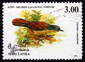 Postage stamp Sri Lanka 1993 Ashy-headed Laughingthrush, Bird — Foto Stock