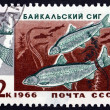 Postage stamp Russia 1966 Two Baikal Whitefish — Stock Photo #43130295