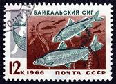 почтовая марка россии 1966 два байкальский сиг — Стоковое фото